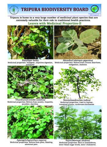 Leaves with Medicinal properties